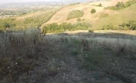 terreno_agricolo-in-vendita-a-SANT'ANGELO